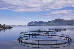 Le CESE s'engage pour une aquaculture durable